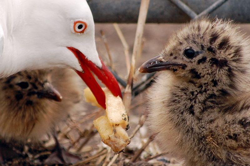 BIRDS 149-crop