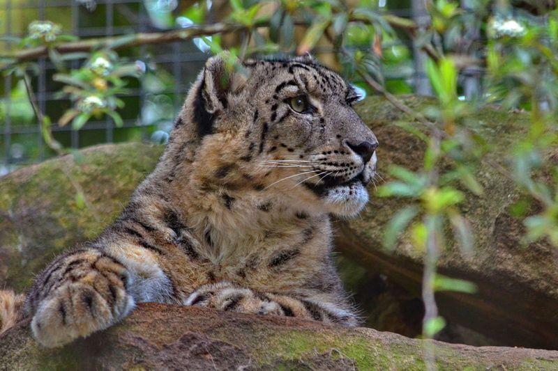 Taronga Zoo 075